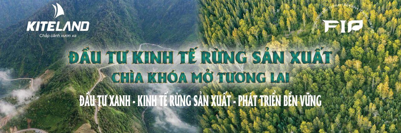 có nên đầu tư đất rừng sản xuất