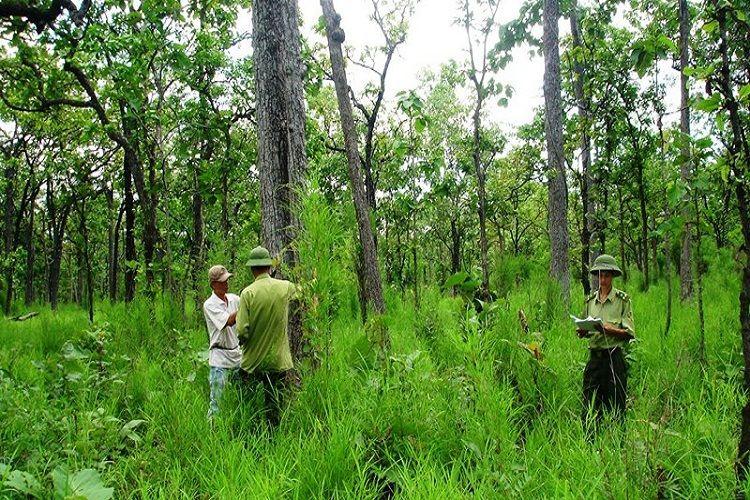 Đơn vị quản lý đất rừng