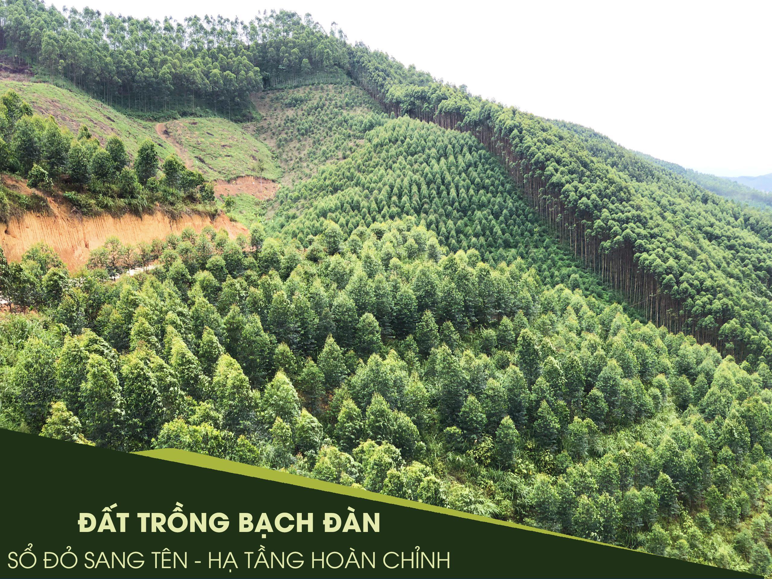 Đất rừng sản xuất